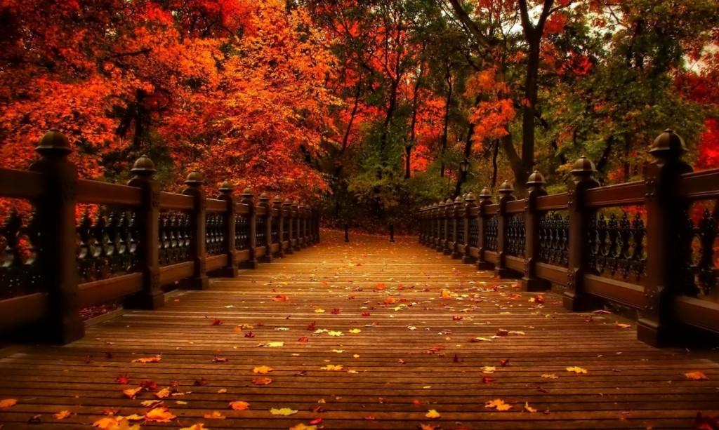 Cruza el puente!… 100 posibles motivos para ir a Psicoterapia